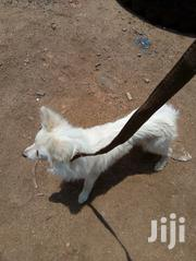 Japanese Spitz Puppy | Dogs & Puppies for sale in Kisumu, Migosi