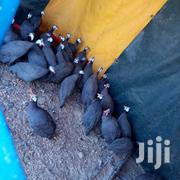 Plugged One On One | Birds for sale in Kirinyaga, Wamumu