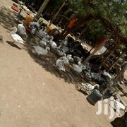 Geese And All Types Of Ducks | Livestock & Poultry for sale in Kirinyaga, Wamumu