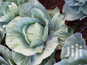 Cabbages For Sale | Feeds, Supplements & Seeds for sale in Kiambu, Ngoliba