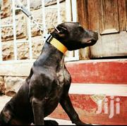 "For Inqvres ""Pitbull"" 