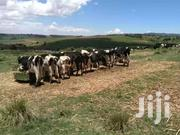 Prime 630 Acres Mau Narok | Land & Plots For Sale for sale in Nakuru, Mau Narok