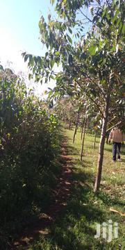 Land In Eldoret With Trees | Land & Plots For Sale for sale in Uasin Gishu, Soy