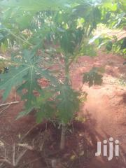 Fruits Trees | Feeds, Supplements & Seeds for sale in Kilifi, Kibarani