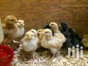 Kienyeji Chicks | Livestock & Poultry for sale in Kajiado, Ongata Rongai