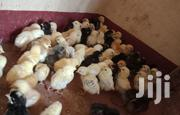 4 Days Old Kienyeji Chicks | Livestock & Poultry for sale in Nairobi, Komarock