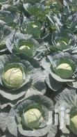Cabbages For Sale | Feeds, Supplements & Seeds for sale in Kinale, Kiambu, Kenya