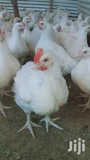 Broiler Chickens | Livestock & Poultry for sale in Embu, Evurore