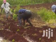 Six Acres For Lease With River Water | Land & Plots for Rent for sale in Kirinyaga, Nyangati
