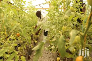 Affordable Greenhouses For Sale