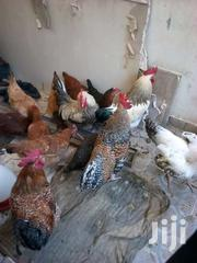 Improved Chicken | Livestock & Poultry for sale in Machakos, Syokimau/Mulolongo