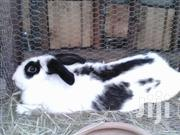 Rabbits For Sale | Other Animals for sale in Nairobi, Ruai