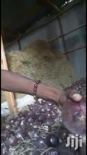 Onions At Whole Sale Of 60/- Per Kg | Feeds, Supplements & Seeds for sale in Nairobi, Nairobi Central