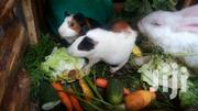 Guinea Pigs (Royal Pets) | Other Animals for sale in Mombasa, Mkomani