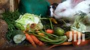 Rabbits For Sale | Other Animals for sale in Mombasa, Mkomani