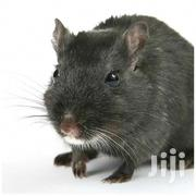 Pest Control Services | Other Services for sale in Nairobi, Umoja II