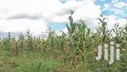 5 Acre Agricultural Land for Sale-Naivasha | Land & Plots For Sale for sale in Nairobi, Nairobi Central