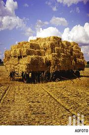 Hay, Boma Rhodes   Feeds, Supplements & Seeds for sale in Laikipia, Nanyuki