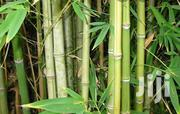 Bamboo Poles And Sticks-self Harvest And Carry | Garden for sale in Kiambu, Kabete