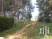 Newly Subdivided Plots Runda Estate Nyahururu At 1.3 M Only | Land & Plots For Sale for sale in Nyandarua, Gatimu