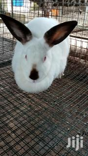 Rabbits For Sale | Livestock & Poultry for sale in Nairobi, Kasarani