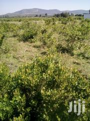 2.5 ACRES Land For Sale At Mugumo, Daiga, NANYUKI. | Land & Plots For Sale for sale in Laikipia, Umande