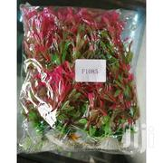 Aquarium Plants 15 Inches | Pet's Accessories for sale in Nairobi, Nairobi Central