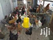 Fertilized Kuroiler Eggs | Livestock & Poultry for sale in Nairobi, Embakasi