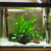 Fish Tanks | Fish for sale in Nairobi, Kilimani
