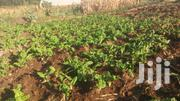Pictures Plot RUIRU Matangini Near Administration Police Post | Land & Plots For Sale for sale in Nyeri, Rware