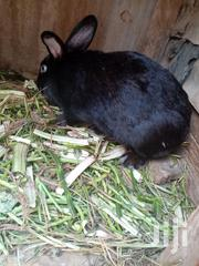 Rabbit For Sale | Other Animals for sale in Nairobi, Kasarani