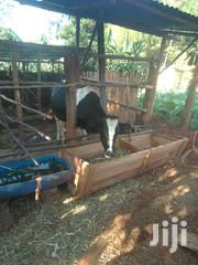 Selling Heifer | Livestock & Poultry for sale in Nyeri, Aguthi-Gaaki