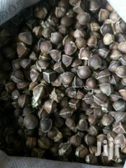 Moringa Seeds | Feeds, Supplements & Seeds for sale in Nyandarua, NjabiniKiburu