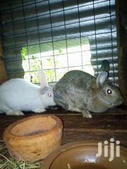 Mature High Breed Rabbits | Other Animals for sale in Nairobi, Nairobi Central