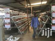 Chicken Layers Cages. | Livestock & Poultry for sale in Nairobi, Kasarani