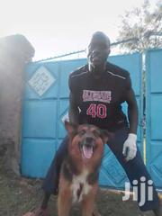 Dog Breeder And Trainer | Pet Services for sale in Uasin Gishu, Soy