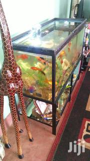 Giant Aquarium for Homes and Businesses | Fish for sale in Nyeri, Gakawa