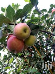 Apple Seedlings | Feeds, Supplements & Seeds for sale in Nairobi, Nairobi Central