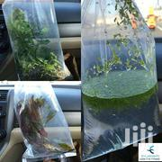 Aquariums Live Plants | Garden for sale in Nairobi, Nairobi Central