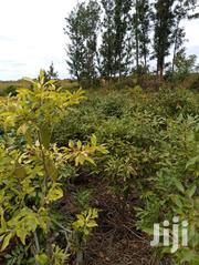 One Acre Miraa Land on Quick Sale | Land & Plots For Sale for sale in Embu, Mbeti South