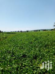 20 Acres for Sale in Mawe Farm Rongai | Land & Plots For Sale for sale in Nakuru, Soin (Rongai)