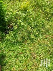 7acres Land For Sale-migori,Uriri | Land & Plots For Sale for sale in Migori, Central Kanyamkago