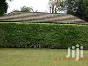 Executive 5 Bedroom Town House for Sale in RUNDA | Houses & Apartments For Sale for sale in Nairobi, Karen