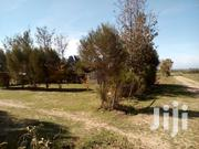 Daiga Next to Loldaiga Conservancy 1 Acre Selling Cheaply   Land & Plots For Sale for sale in Laikipia, Nanyuki