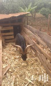 Goat For Sale | Livestock & Poultry for sale in Nairobi, Nairobi Central