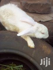 Rabbit For Sale | Livestock & Poultry for sale in Nairobi, Parklands/Highridge