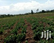 Nanyuki Farming 16acrea | Land & Plots for Rent for sale in Laikipia, Nanyuki