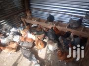 Mature Improved Kienyeji | Livestock & Poultry for sale in Machakos, Masii