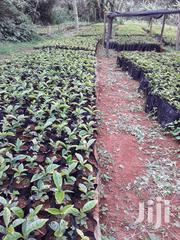 Nyeri Muthuaini 1/2 +1/8 | Land & Plots For Sale for sale in Nyeri, Kamakwa/Mukaro