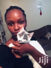 Young Male Purebred | Cats & Kittens for sale in Nairobi, Kahawa